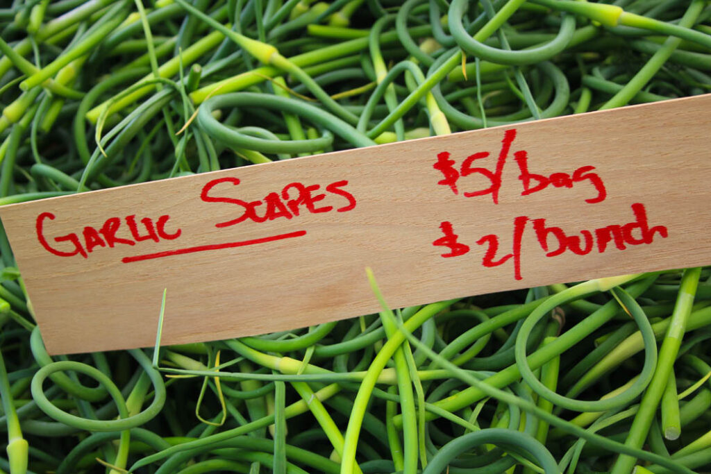Tangled Pile of Garlic Scape