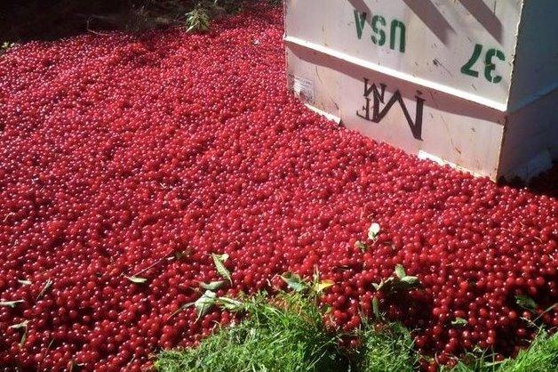 Dumping Cherries
