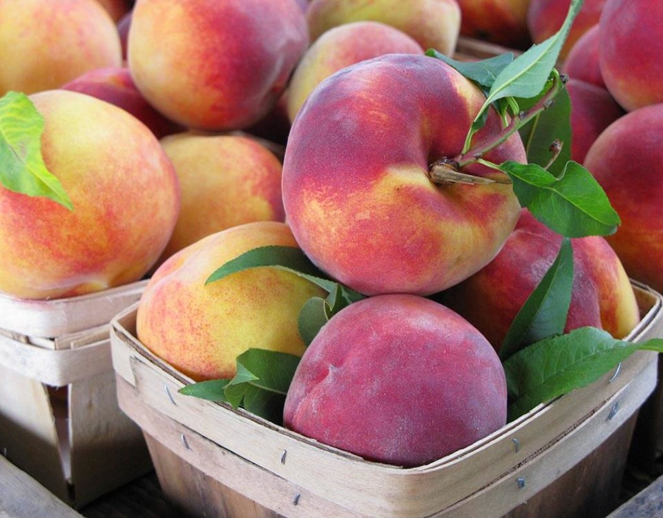 Perfect Peaches Ready for a Summer Fruit Pie