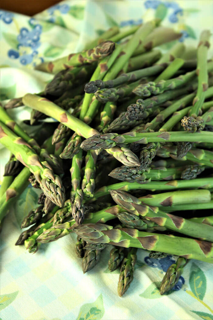 Farm Fresh Asparagus