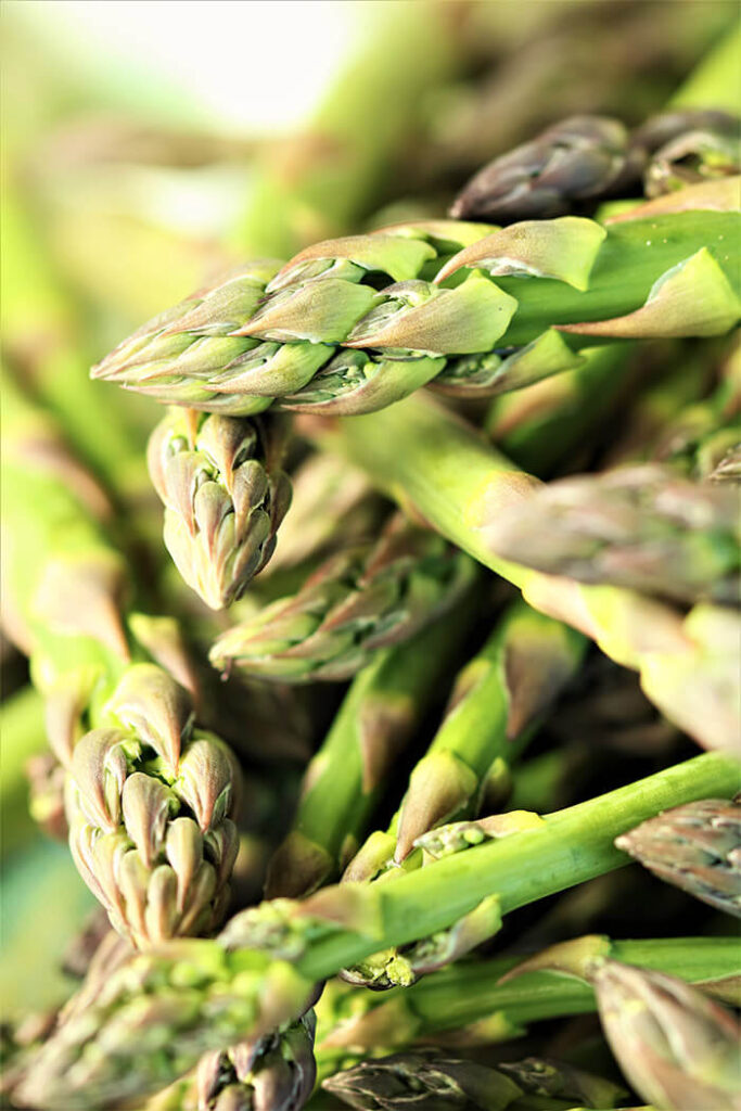 Picking the best - asparagus