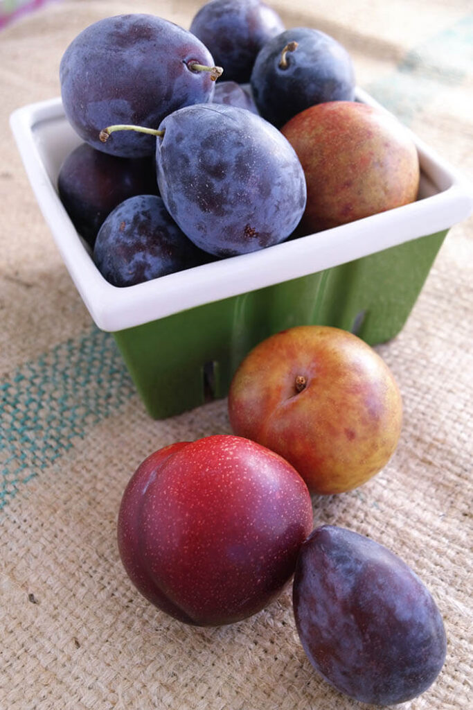 Plums are an essential flavor in many Asian cuisines, but especially  Japanese and Chinese. While neither the salsa nor the pork marinade are  authentic, ...