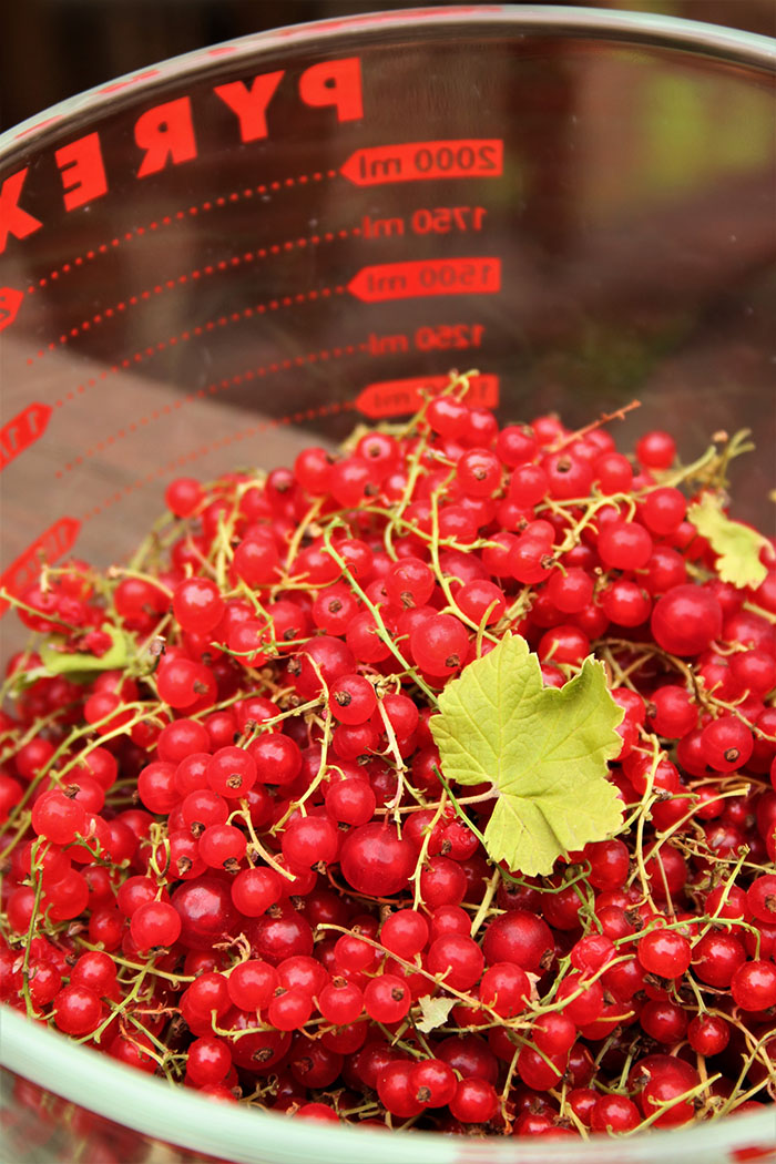 Prepping the currants