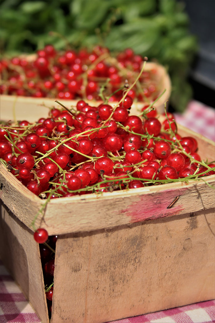 red currants at market
