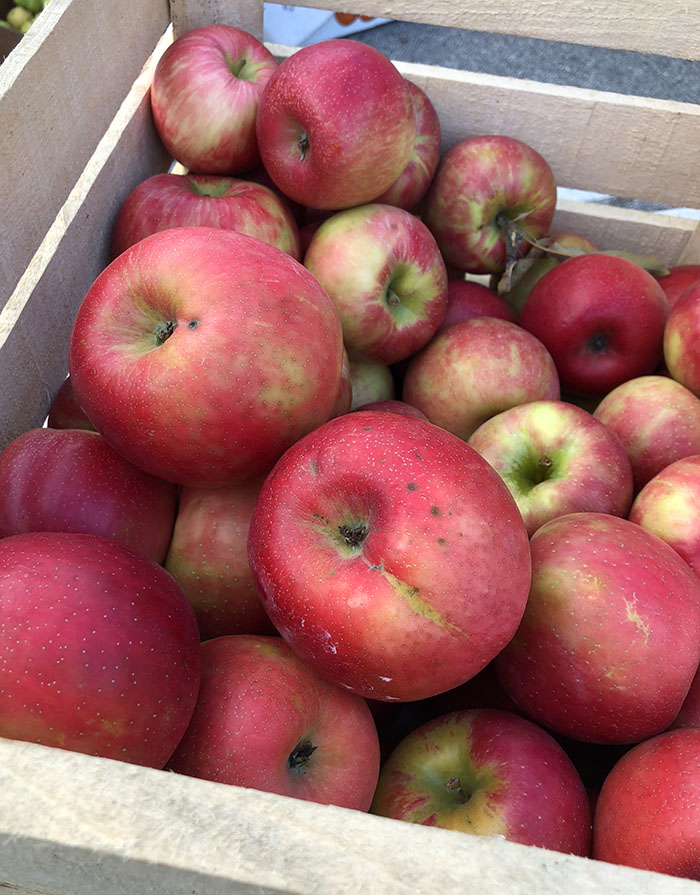Apples at the farm