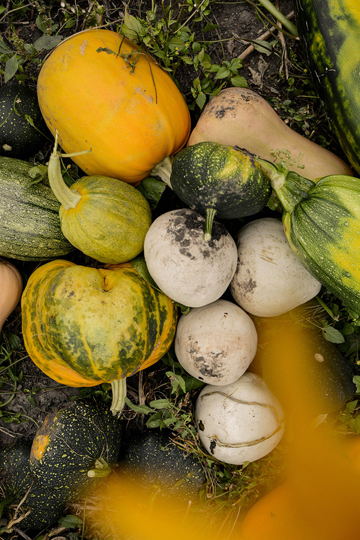 Squash varieties by Reka Matyas