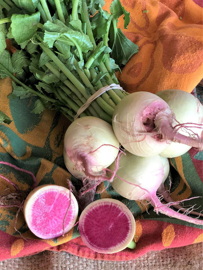 Bunch of Watermelon Radishes